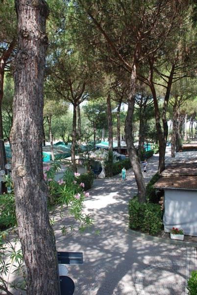 Camping Lilly Pineta Partaccia